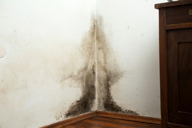 4 Ways To Detect Mold In Your House And Learn How Avoid It